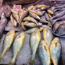 salt-water fish (wild and farmed)