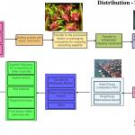Dragon fruit-Pinapple distribution