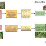 Dragon fruit-Pinapple production